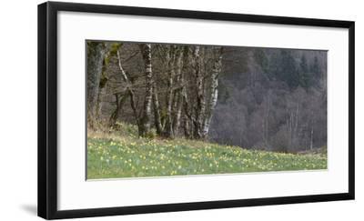 Germany, North Rhine-Westphalia, Rur Eifel (Local Recreation Area-Andreas Keil-Framed Photographic Print