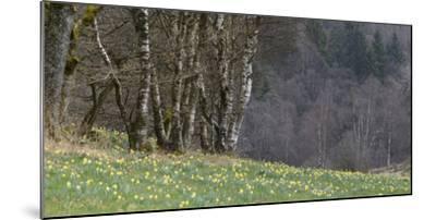 Germany, North Rhine-Westphalia, Rur Eifel (Local Recreation Area-Andreas Keil-Mounted Photographic Print