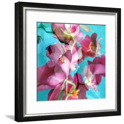 Dreamy Pink Blooming Miltonia Orchid and Phaleaonopsis Infront of Light Blue Backgound-Alaya Gadeh-Framed Photographic Print