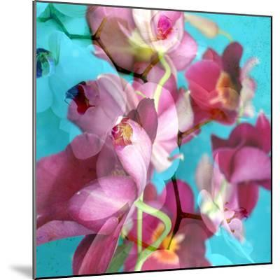 Dreamy Pink Blooming Miltonia Orchid and Phaleaonopsis Infront of Light Blue Backgound-Alaya Gadeh-Mounted Photographic Print