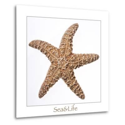 Maritime Still Life with Starfish-Uwe Merkel-Metal Print