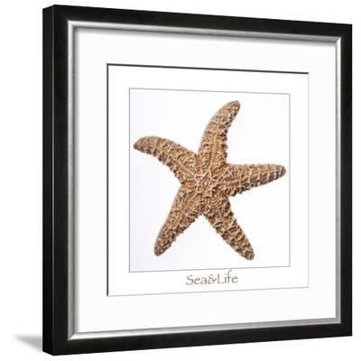 Maritime Still Life with Starfish-Uwe Merkel-Framed Photographic Print