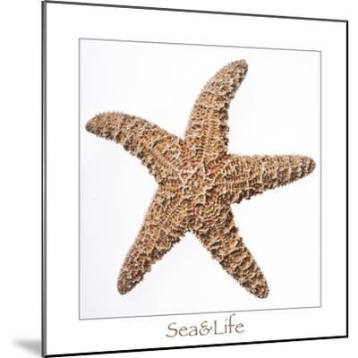 Maritime Still Life with Starfish-Uwe Merkel-Mounted Photographic Print