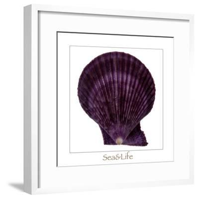 Maritime Still Life with Scallop-Uwe Merkel-Framed Photographic Print