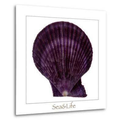 Maritime Still Life with Scallop-Uwe Merkel-Metal Print