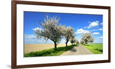Germany, Saxony-Anhalt, Near Naumburg, Blossoming Cherry Trees at Country Road-Andreas Vitting-Framed Premium Photographic Print