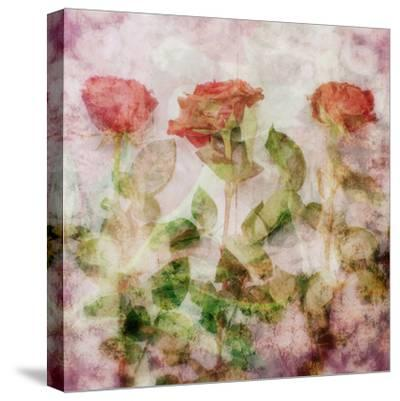 A Dreamy Floral Montage from Three Red Roses-Alaya Gadeh-Stretched Canvas Print