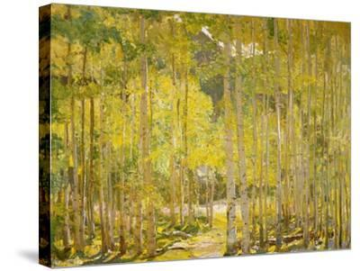 Aspen Forest-Oscar Berninghouse-Stretched Canvas Print