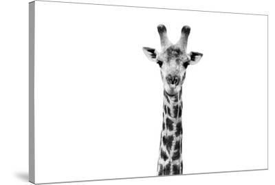 Safari Profile Collection - Giraffe Portrait White Edition II-Philippe Hugonnard-Stretched Canvas Print