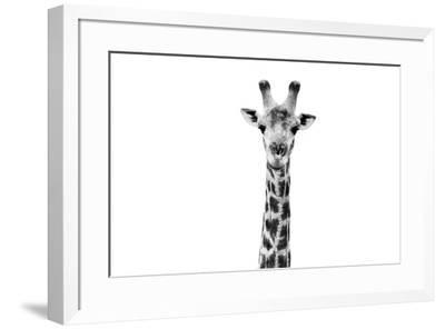 Safari Profile Collection - Giraffe Portrait White Edition II-Philippe Hugonnard-Framed Photographic Print