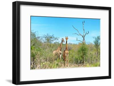 Awesome South Africa Collection - Two Giraffes-Philippe Hugonnard-Framed Photographic Print