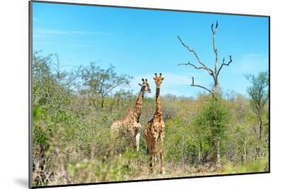 Awesome South Africa Collection - Two Giraffes-Philippe Hugonnard-Mounted Photographic Print