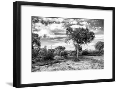 Awesome South Africa Collection B&W - African Landscape with Acacia Tree IX-Philippe Hugonnard-Framed Photographic Print