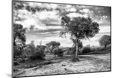 Awesome South Africa Collection B&W - African Landscape with Acacia Tree IX-Philippe Hugonnard-Mounted Photographic Print