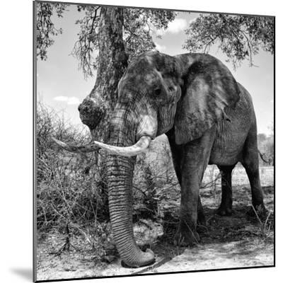 Awesome South Africa Collection Square - African Elephant B&W-Philippe Hugonnard-Mounted Photographic Print