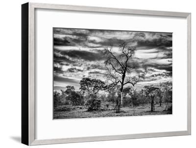 Awesome South Africa Collection B&W - African Landscape with Acacia Tree II-Philippe Hugonnard-Framed Photographic Print
