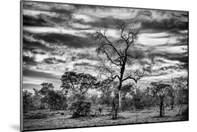 Awesome South Africa Collection B&W - African Landscape with Acacia Tree II-Philippe Hugonnard-Mounted Photographic Print
