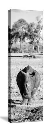 Awesome South Africa Collection Panoramic - Black Rhino B&W-Philippe Hugonnard-Stretched Canvas Print