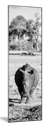 Awesome South Africa Collection Panoramic - Black Rhino B&W-Philippe Hugonnard-Mounted Photographic Print