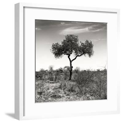 Awesome South Africa Collection Square - One Acacia Tree B&W-Philippe Hugonnard-Framed Photographic Print