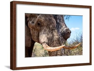 Awesome South Africa Collection - African Elephant VI-Philippe Hugonnard-Framed Photographic Print