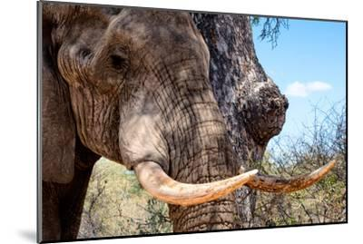 Awesome South Africa Collection - African Elephant VI-Philippe Hugonnard-Mounted Photographic Print