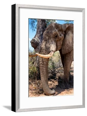 Awesome South Africa Collection - African Elephant V-Philippe Hugonnard-Framed Photographic Print