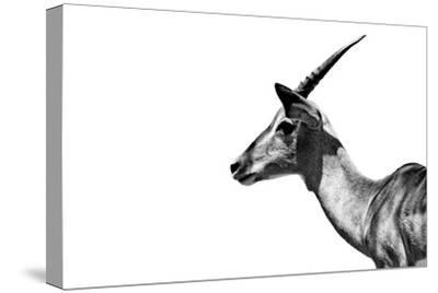 Safari Profile Collection - Antelope Impala White Edition-Philippe Hugonnard-Stretched Canvas Print