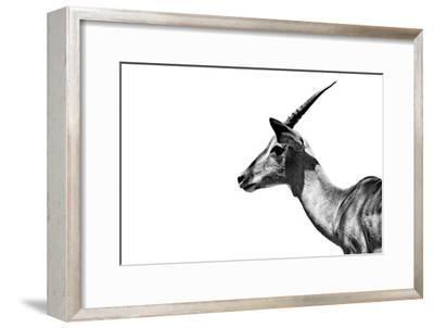 Safari Profile Collection - Antelope Impala White Edition-Philippe Hugonnard-Framed Photographic Print