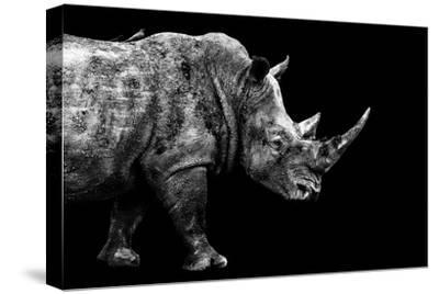 Safari Profile Collection - Rhino Black Edition-Philippe Hugonnard-Stretched Canvas Print