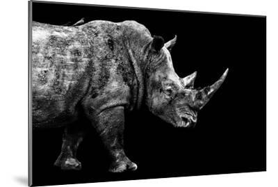 Safari Profile Collection - Rhino Black Edition-Philippe Hugonnard-Mounted Photographic Print