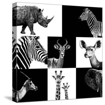 Safari Profile Collection-Philippe Hugonnard-Stretched Canvas Print