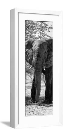 Awesome South Africa Collection Panoramic - Old African Elephant B&W-Philippe Hugonnard-Framed Photographic Print