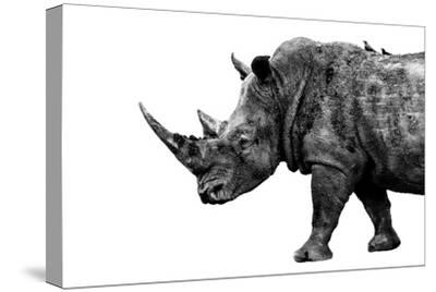 Safari Profile Collection - Rhino White Edition-Philippe Hugonnard-Stretched Canvas Print