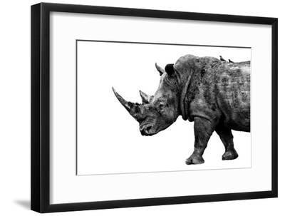 Safari Profile Collection - Rhino White Edition-Philippe Hugonnard-Framed Photographic Print