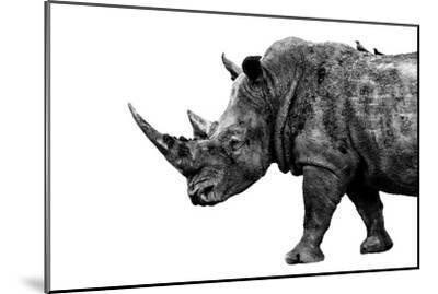 Safari Profile Collection - Rhino White Edition-Philippe Hugonnard-Mounted Photographic Print