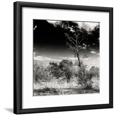 Awesome South Africa Collection Square - Savannah Trees B&W-Philippe Hugonnard-Framed Photographic Print