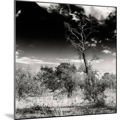 Awesome South Africa Collection Square - Savannah Trees B&W-Philippe Hugonnard-Mounted Photographic Print