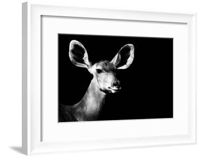Safari Profile Collection - Antelope Impala Portrait Black Edition II-Philippe Hugonnard-Framed Photographic Print