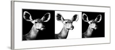 Safari Profile Collection - Antelopes Impalas Portraits IV-Philippe Hugonnard-Framed Photographic Print