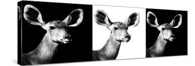 Safari Profile Collection - Antelopes Impalas Portraits IV-Philippe Hugonnard-Stretched Canvas Print