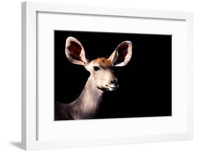 Safari Profile Collection - Antelope Impala Portrait Black Edition-Philippe Hugonnard-Framed Photographic Print