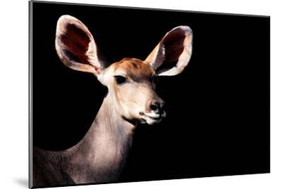 Safari Profile Collection - Antelope Impala Portrait Black Edition-Philippe Hugonnard-Mounted Photographic Print
