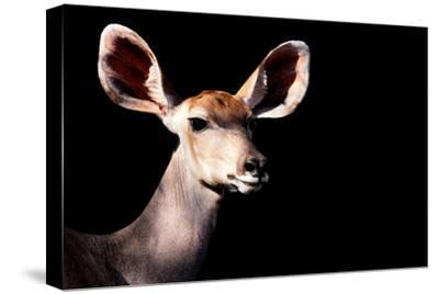 Safari Profile Collection - Antelope Impala Portrait Black Edition-Philippe Hugonnard-Stretched Canvas Print