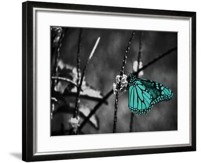 Lone Colored Butterfly II-Gail Peck-Framed Photographic Print