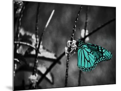 Lone Colored Butterfly II-Gail Peck-Mounted Photographic Print