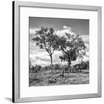 Awesome South Africa Collection Square - Savannah Trees II B&W-Philippe Hugonnard-Framed Photographic Print
