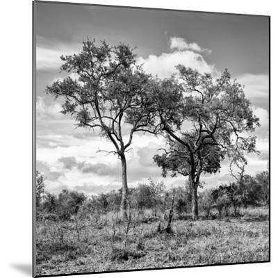 Awesome South Africa Collection Square - Savannah Trees II B&W-Philippe Hugonnard-Mounted Photographic Print