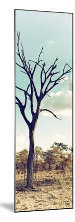 Awesome South Africa Collection Panoramic - Dead Tree in the Savannah II-Philippe Hugonnard-Mounted Photographic Print