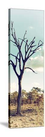 Awesome South Africa Collection Panoramic - Dead Tree in the Savannah II-Philippe Hugonnard-Stretched Canvas Print